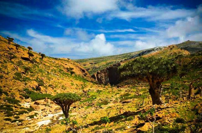 Сокотра - острів щастя, міфів і легенд